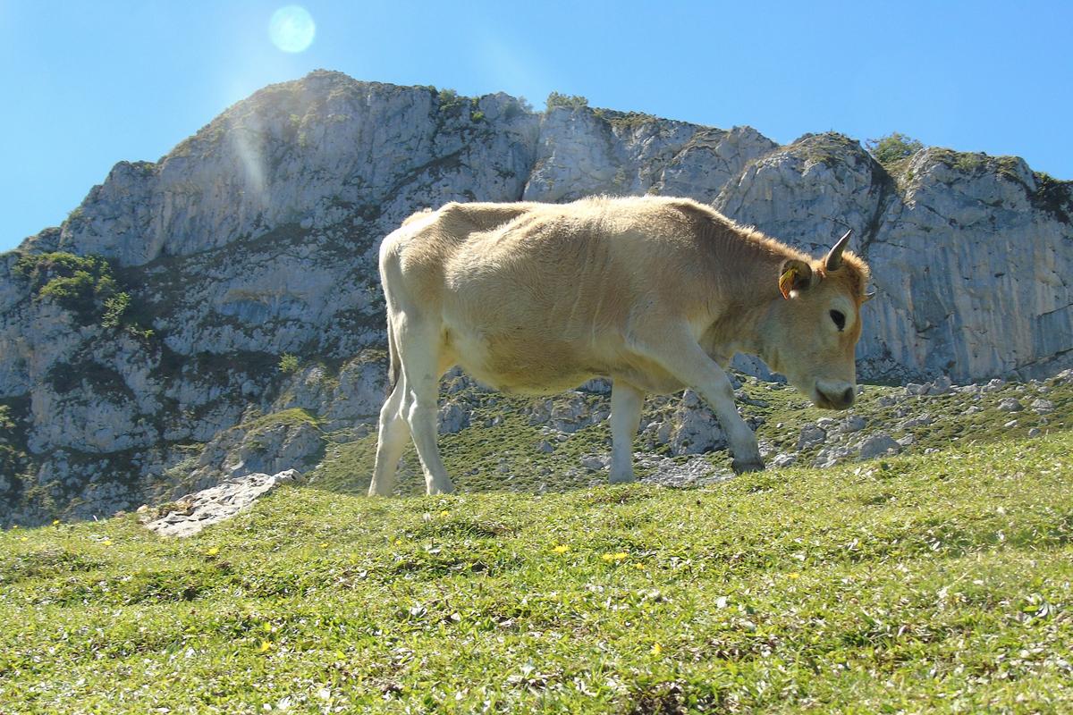 Paisaje natural en el entorno de los Lagos de Covadonga